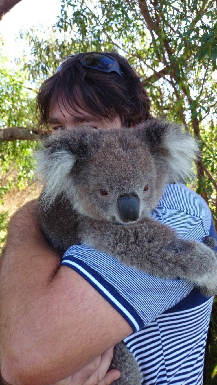 koala-aparece-con-una-sorpresa-3