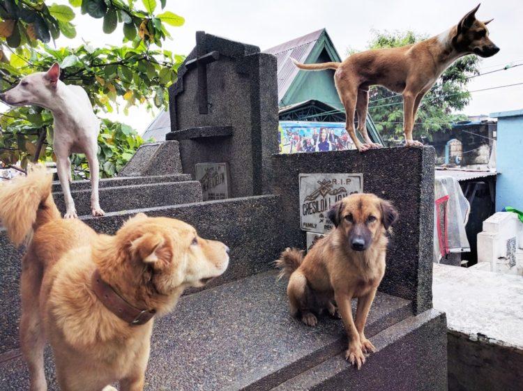 la-mujer-encuentra-el-cementerio-por-completo-de-perros-hambrientos-1