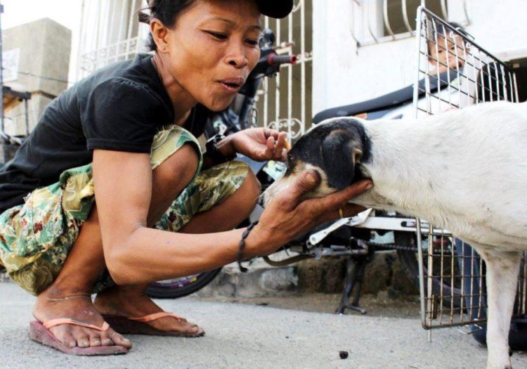 la-mujer-encuentra-el-cementerio-por-completo-de-perros-hambrientos-13