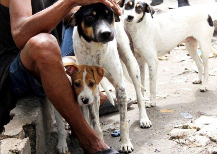la-mujer-encuentra-el-cementerio-por-completo-de-perros-hambrientos-9