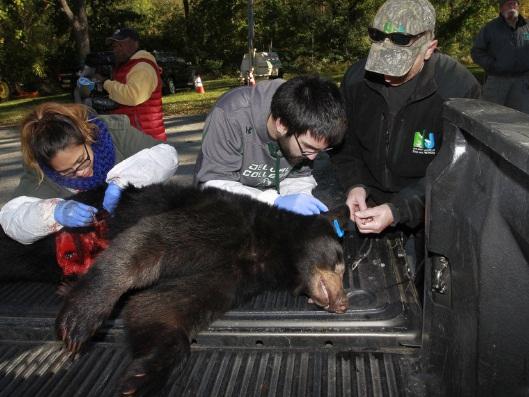mas-de-285-osos-asesinados-5
