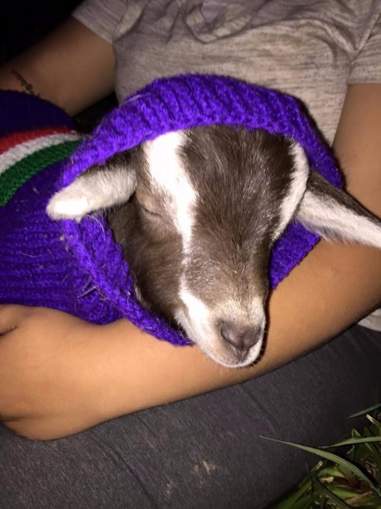 millie-cabra-refugio-australia-02