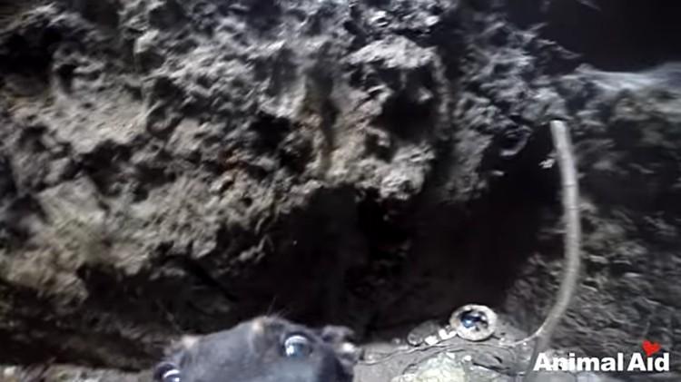 perra-rescatada-pozo-india-07