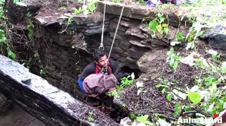 perra-rescatada-pozo-india-11