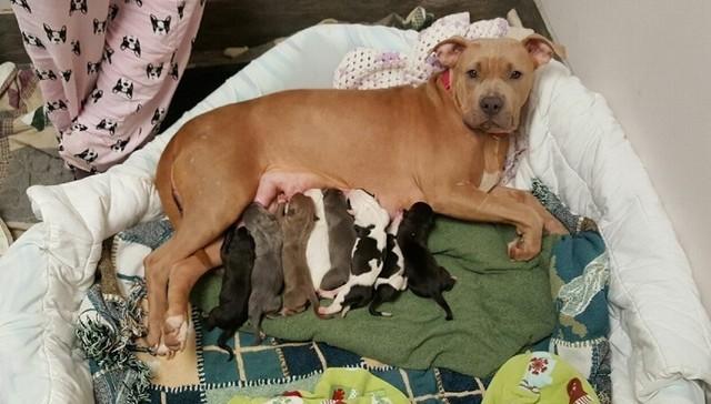 perro-del-refugio-adopta-cachorros-1