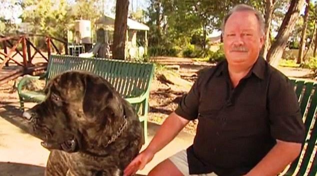 perro-grande-de-australia-5