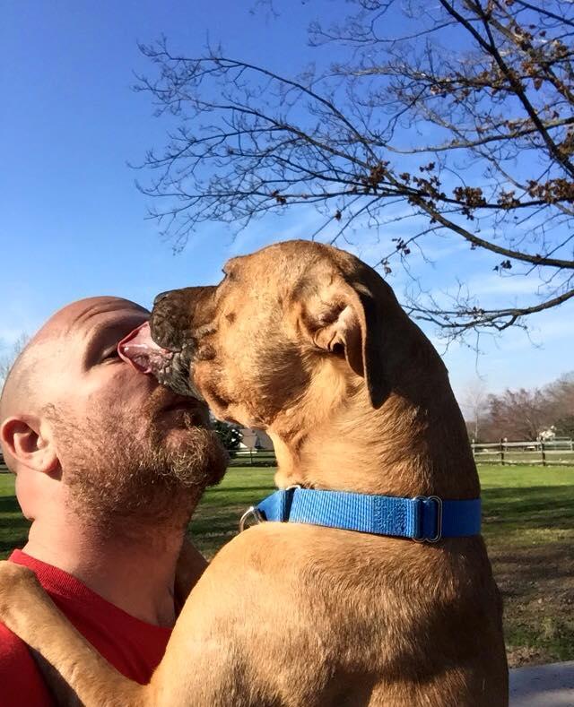 perro-pitbull-desechado-fue-dado-por-muerto-solo-quiere-estar-al-lado-de-su-heroe-17