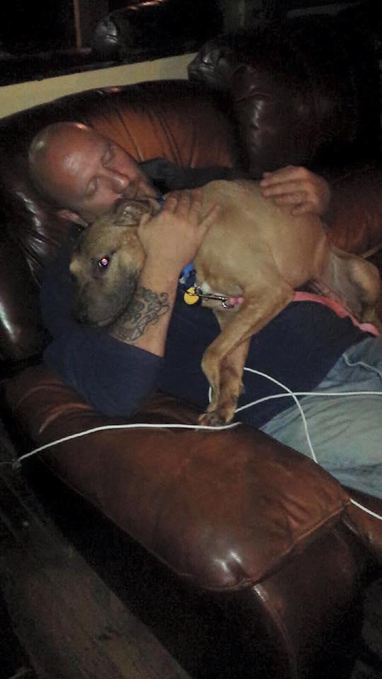 perro-pitbull-desechado-fue-dado-por-muerto-solo-quiere-estar-al-lado-de-su-heroe-18