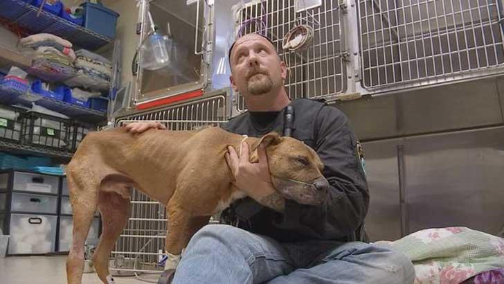 perro-pitbull-desechado-fue-dado-por-muerto-solo-quiere-estar-al-lado-de-su-heroe-4
