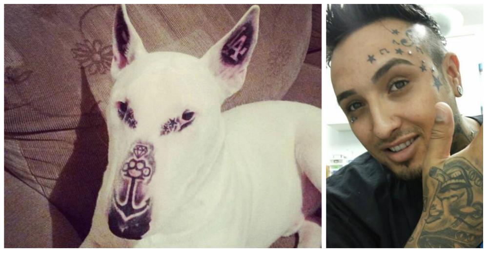 perro-tatuado-brasil-portada