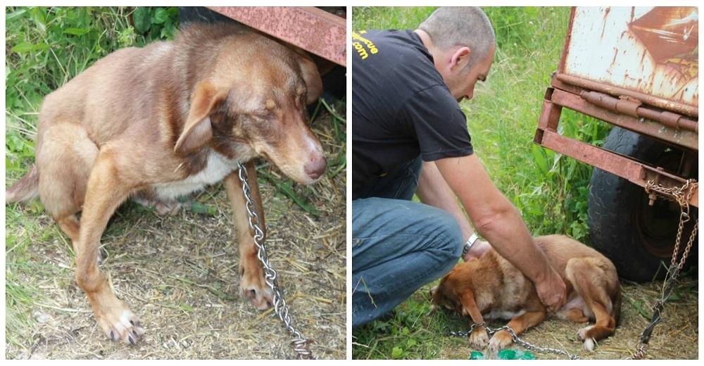 portada-duke-perro-encadenado-a-remolque-en-bulgaria-rescatado