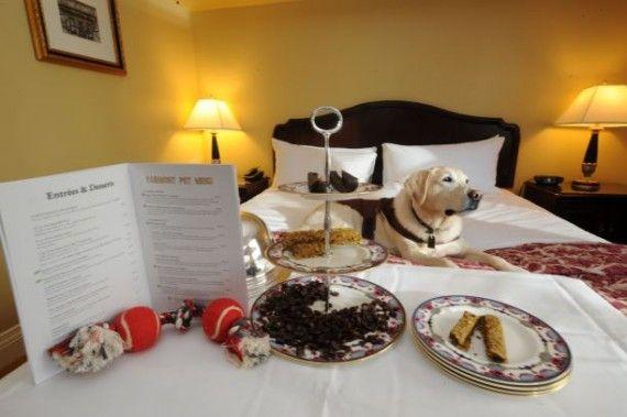pregunto-al-hotel-si-podia-llevar-a-su-perro-2