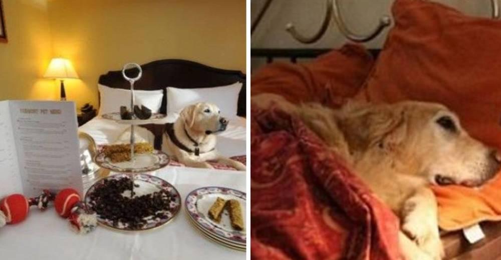 pregunto-al-hotel-si-podia-llevar-a-su-perro-portada