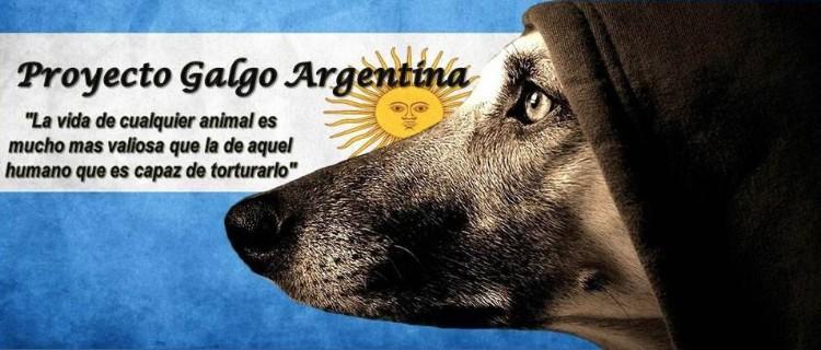 proyecto-galgo-argentina-01
