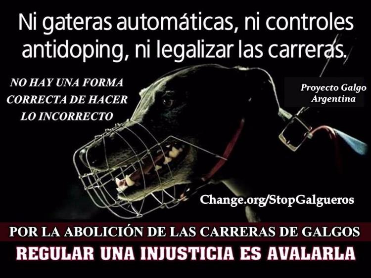 proyecto-galgo-argentina-02