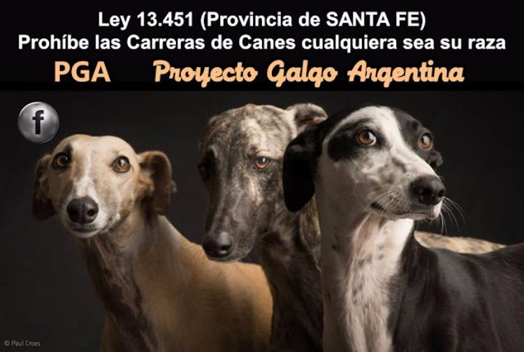 proyecto-galgo-argentina-05