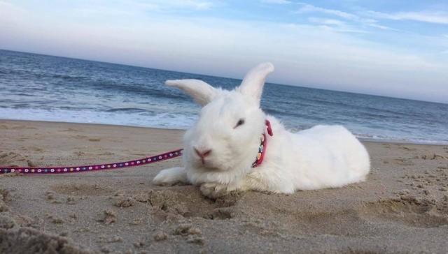 rescate-del-conejito-ama-a-sus-vacaciones-de-la-playa-1