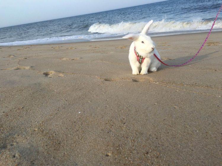 rescate-del-conejito-ama-a-sus-vacaciones-de-la-playa-10