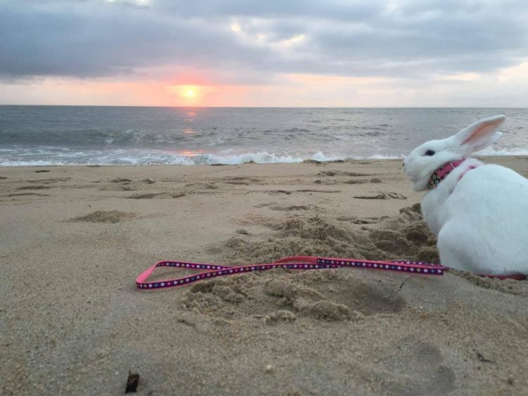 rescate-del-conejito-ama-a-sus-vacaciones-de-la-playa-2