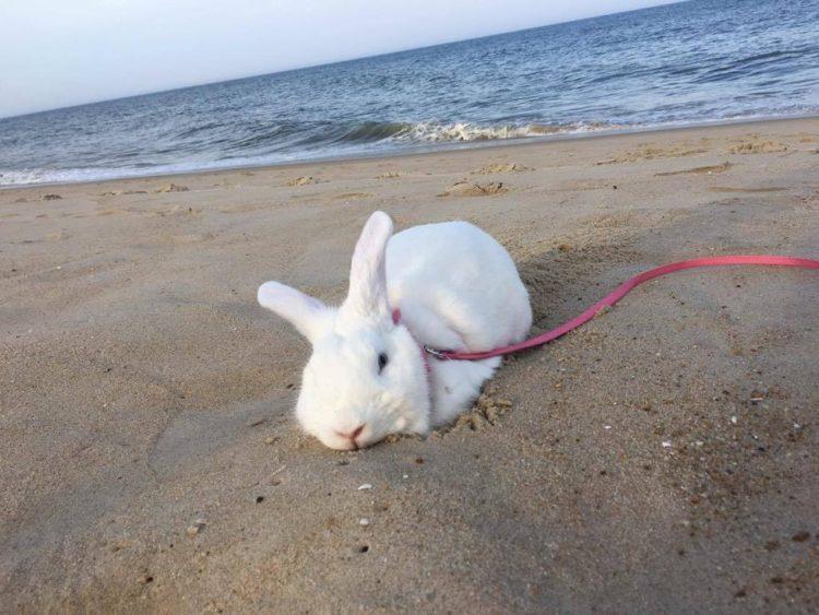 rescate-del-conejito-ama-a-sus-vacaciones-de-la-playa-3
