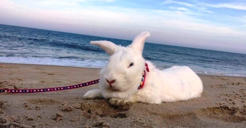 rescate-del-conejito-ama-a-sus-vacaciones-de-la-playa-portada
