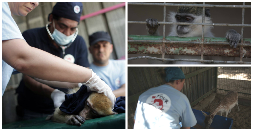 rescate-peor-zoologico-del-mundo-gaza-portada