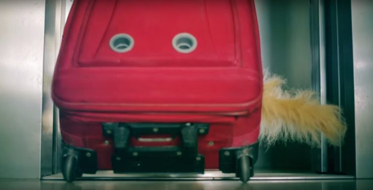 sandra-barneda-impulsa-una-peticion-para-que-renfe-deje-viajar-a-todos-los-perros-1