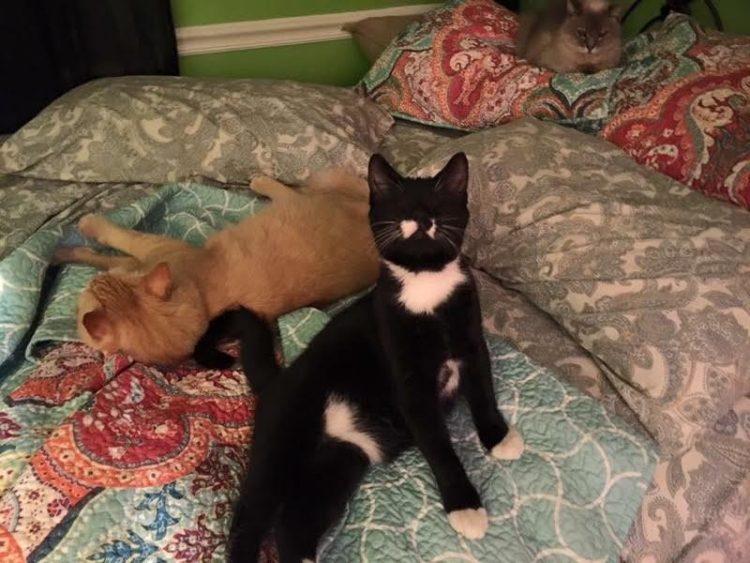 todo-el-mundo-penso-que-este-gatito-tenia-una-extrana-infeccion-en-los-ojos-3