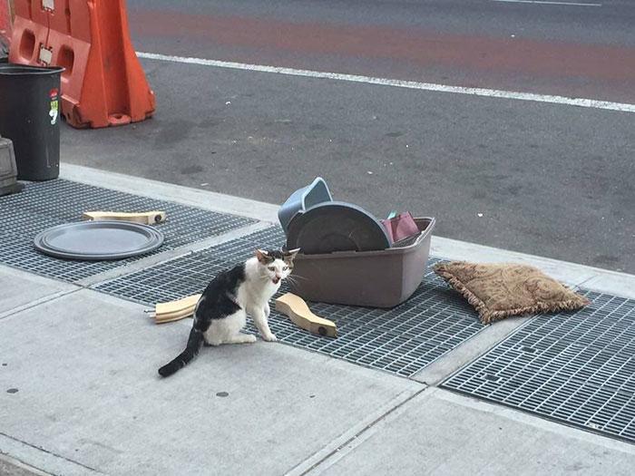 un-gato-en-la-calle-con-su-caja-de-arena-1