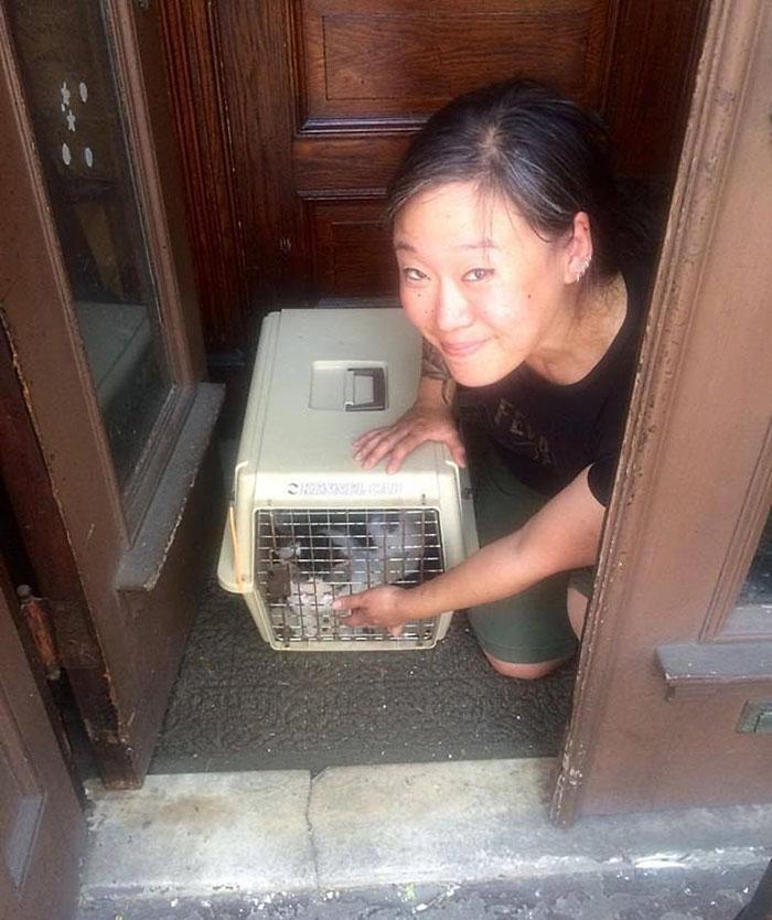 un-gato-en-la-calle-con-su-caja-de-arena-2