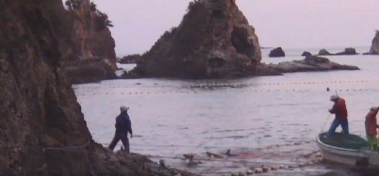 video-detener-masacre-de-delfines-temporada-de-caza-apoyar-proyecto-dolphin-11