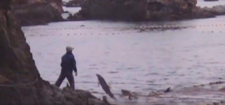 video-detener-masacre-de-delfines-temporada-de-caza-apoyar-proyecto-dolphin-12