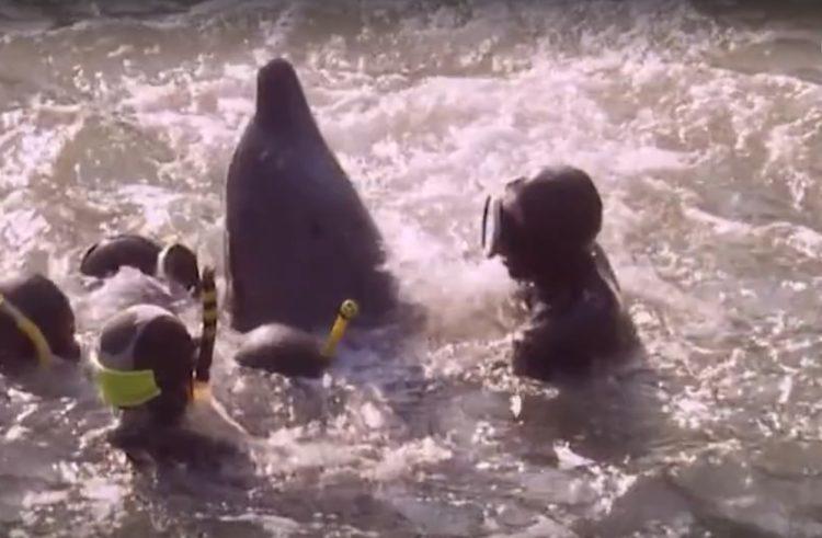 video-detener-masacre-de-delfines-temporada-de-caza-apoyar-proyecto-dolphin-5