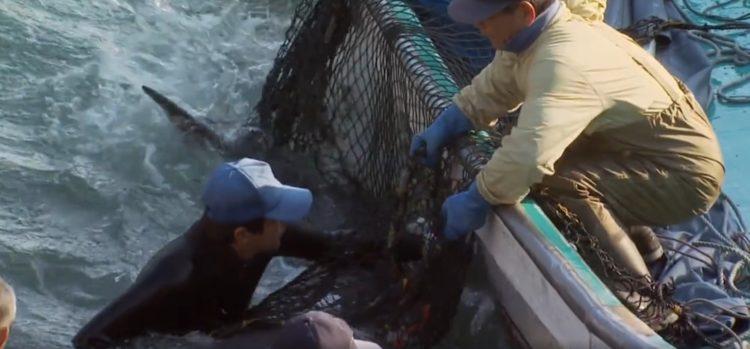 video-detener-masacre-de-delfines-temporada-de-caza-apoyar-proyecto-dolphin-6