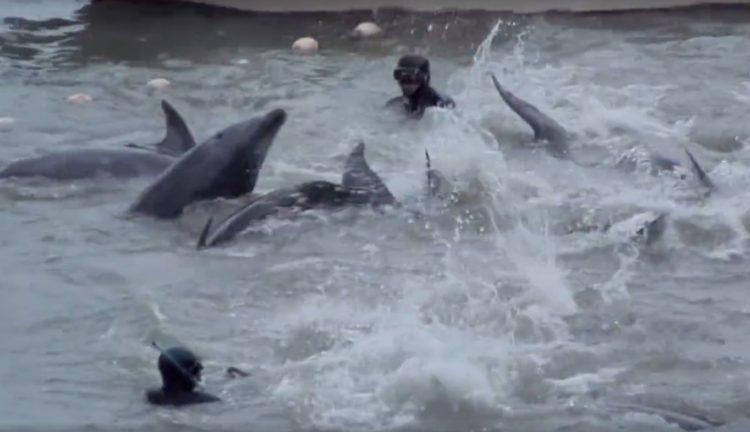 video-detener-masacre-de-delfines-temporada-de-caza-apoyar-proyecto-dolphin-7