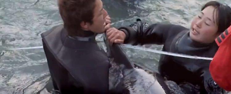 video-detener-masacre-de-delfines-temporada-de-caza-apoyar-proyecto-dolphin-8