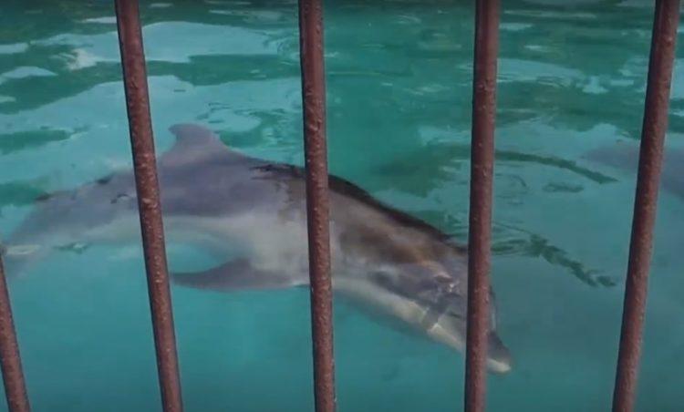 video-detener-masacre-de-delfines-temporada-de-caza-apoyar-proyecto-dolphin-9