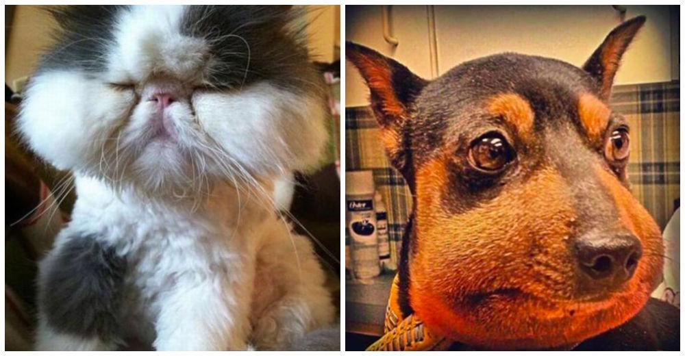 Expertos revelan lo que nunca debes hacer si una abeja pica a tu gato o perro