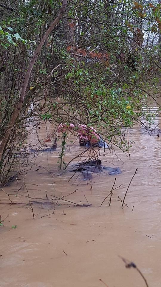 animales-inundacion2