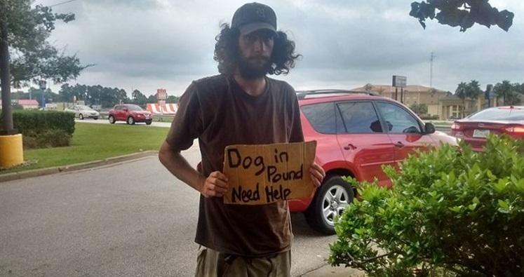 ayuda-perro-mensaje-en-carton-1