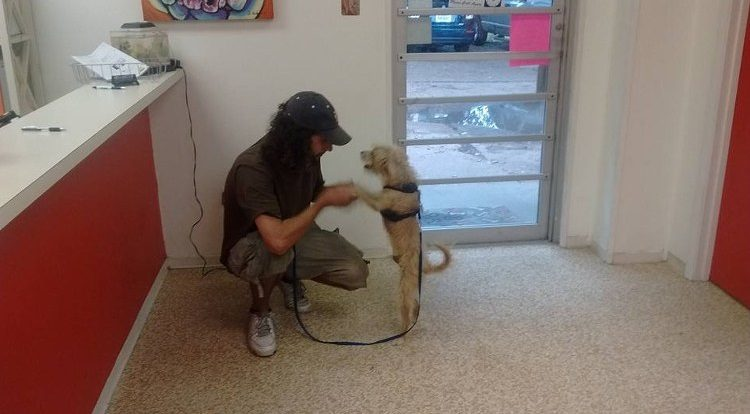 ayuda-perro-mensaje-en-carton-3