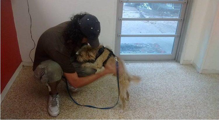 ayuda-perro-mensaje-en-carton-4