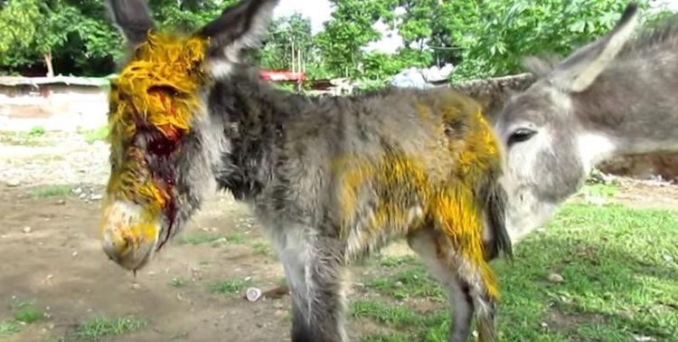 bebe-burro-malherido-1