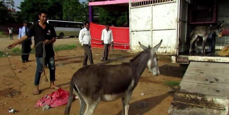 bebe-burro-malherido-3