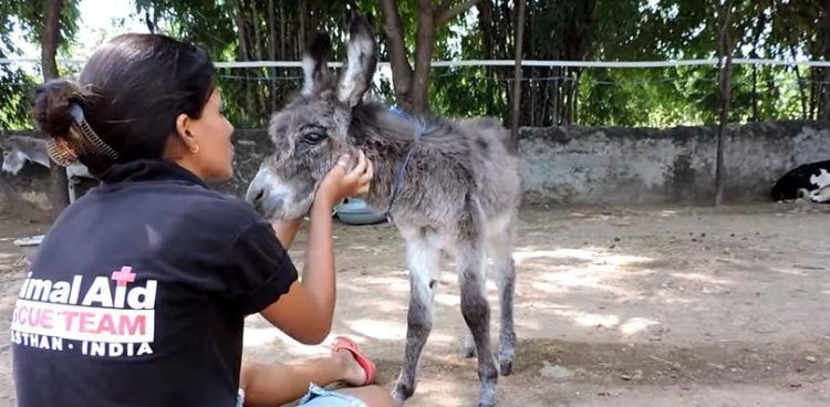 bebe-burro-malherido-7