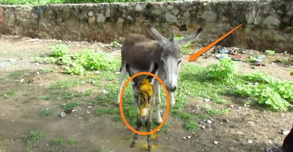 bebe-burro-malherido-id