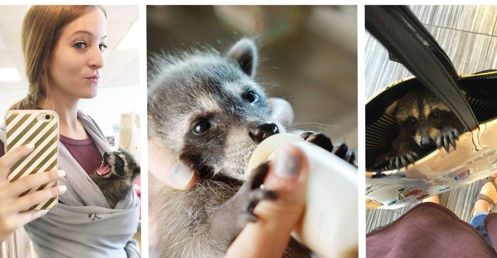 bebe-mapache-consentido-id