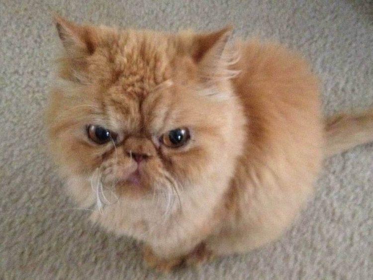 benson-gato2