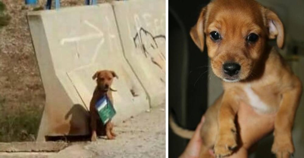 cachorro-melo-rescatado-en-murcia1-copy