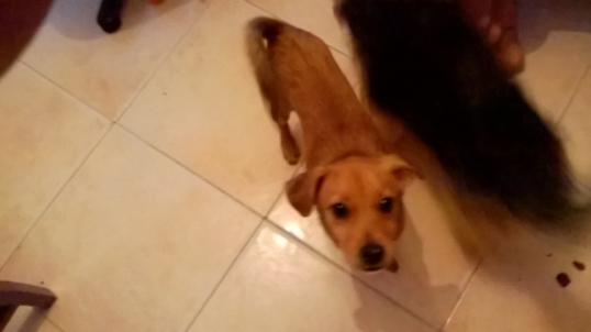 cachorro-melo-rescatado-en-murcia5